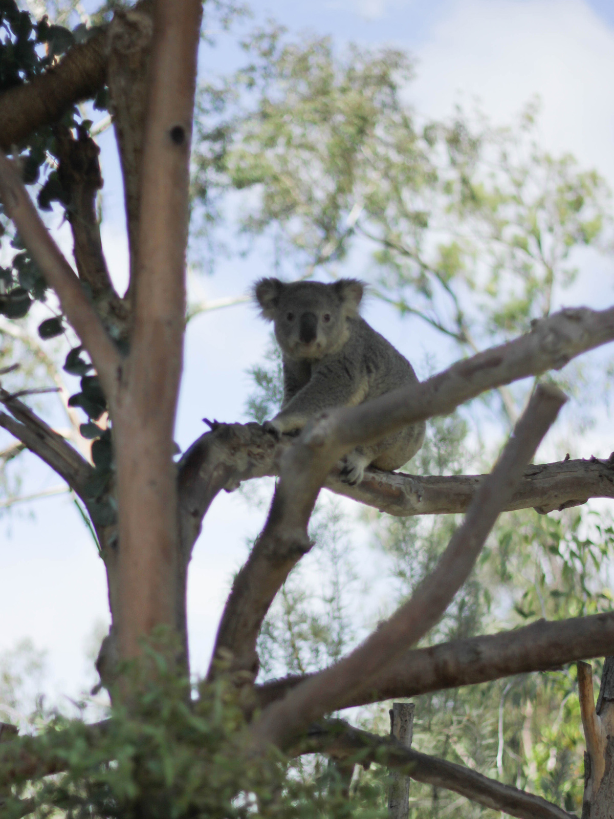 travel-san-diego-koala-beauty-ressort