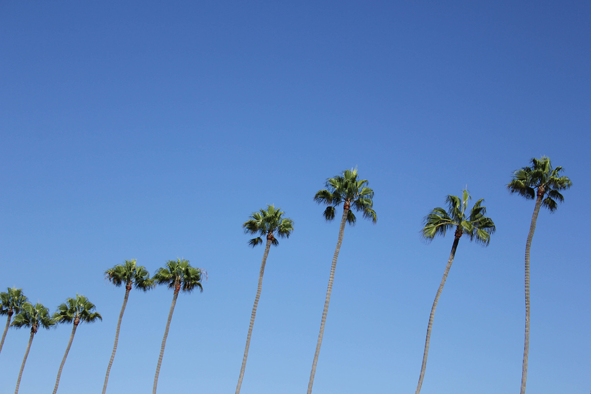 travel-san-diego-palms-beauty-ressort